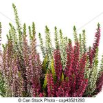 Perennial Planters_dwarf heather